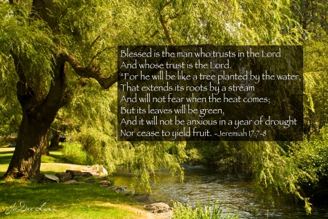willow_tree_by_river_jeremiah-17_7-8_1166.jpg